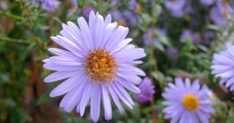 Der Garten im Juni oder vom Wachsen, Gedeihen, Gießen und Ernten